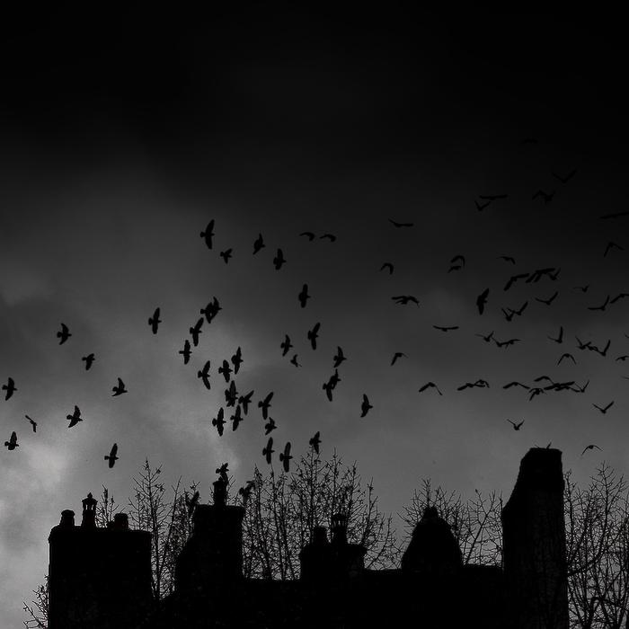 Les oiseaux, Beaune, février 2011