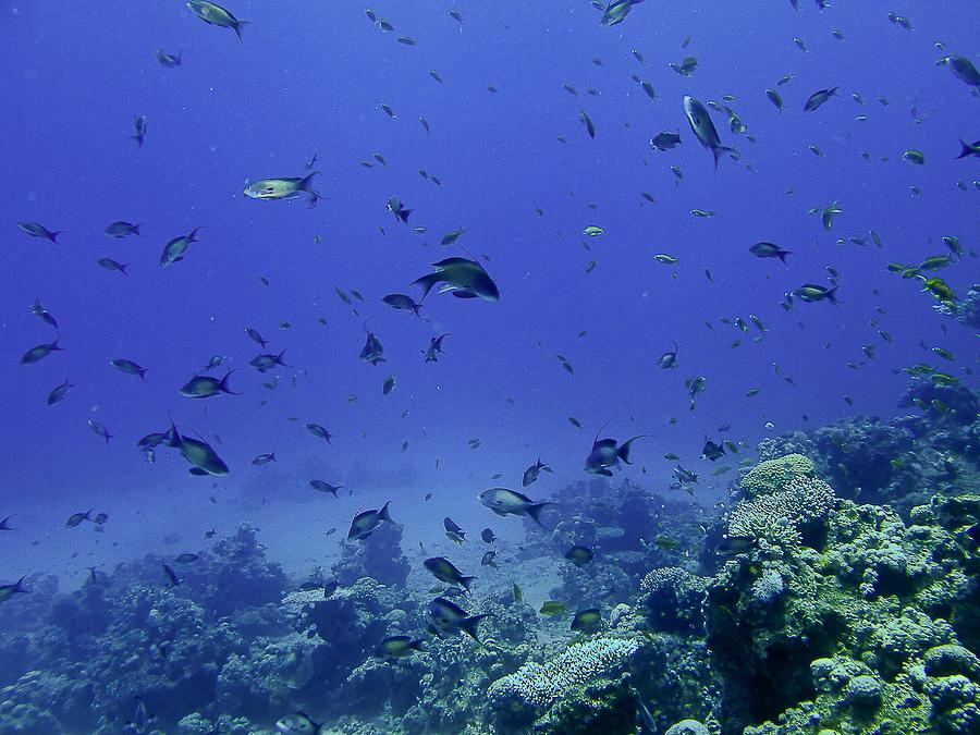 Mer Rouge, Sinai Bay