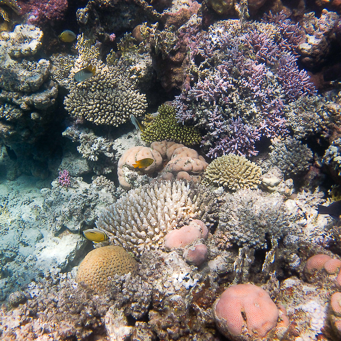 Récif coralien de Marsa Mubarak