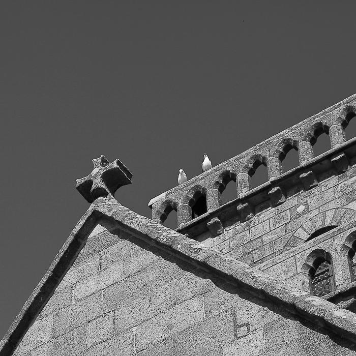 Mont Saint-Michel, les oiseaux 1